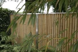 horstmann-bambus-8