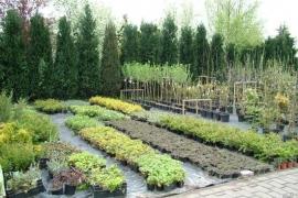 horstmann-pflanzarbeiten-9