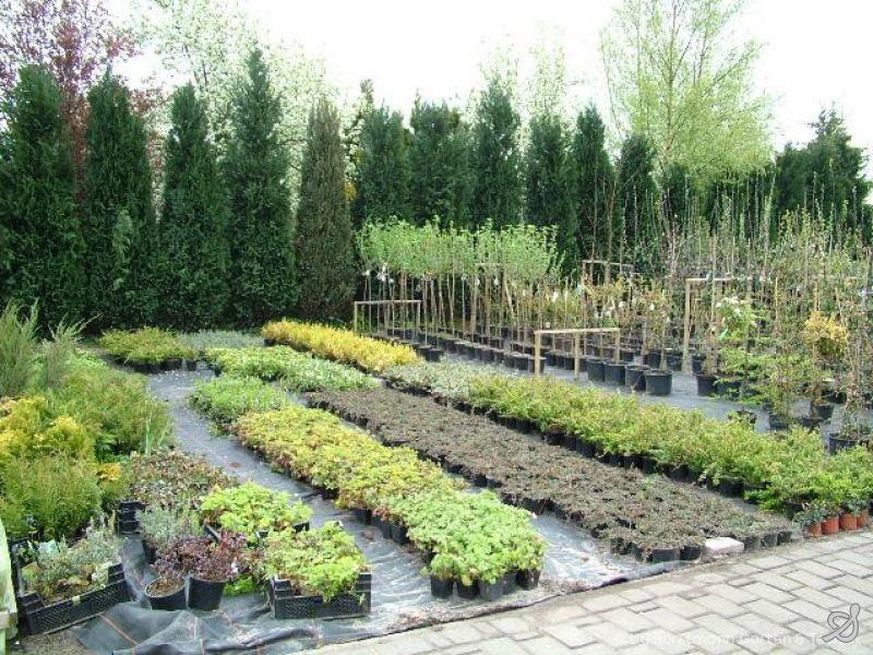Horstmann garten technik pflanzarbeiten for Garten pflege